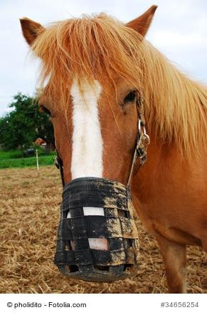 Das Bild zeigt ein Pferd mit Fressbremse. Diese verlangsamt das Fressen.