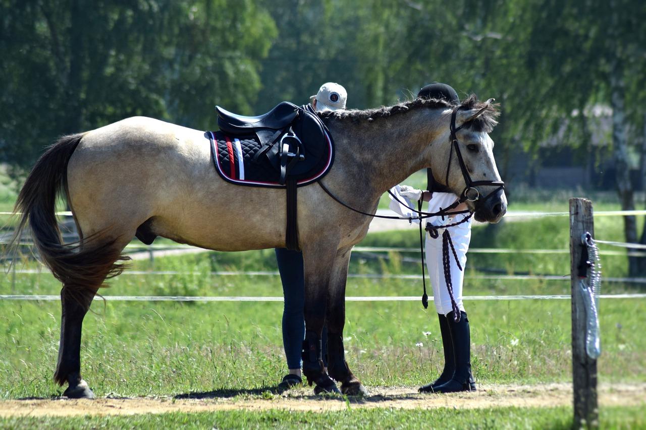 Schabracke Pferd